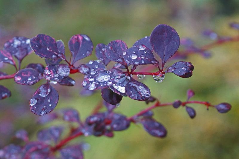 雨上がり_d0162994_12340248.jpg