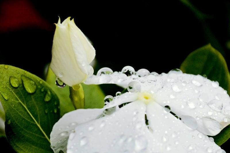 雨上がり_d0162994_12341188.jpg