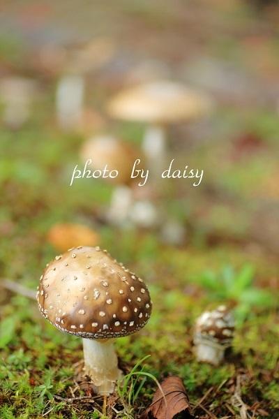 秋の気配_e0230794_16383481.jpg