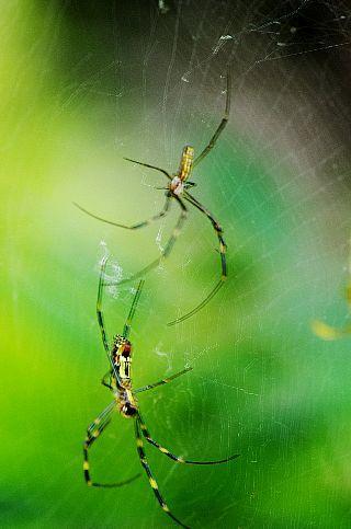 蜘蛛_f0360801_14055051.jpg