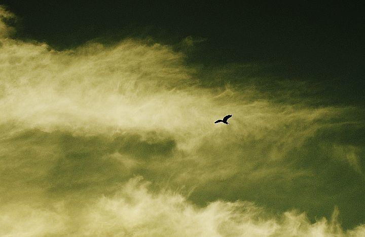 雲_f0360801_16282901.jpg