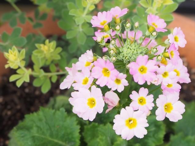 お花の植え替え~♪_a0037322_13241283.jpg