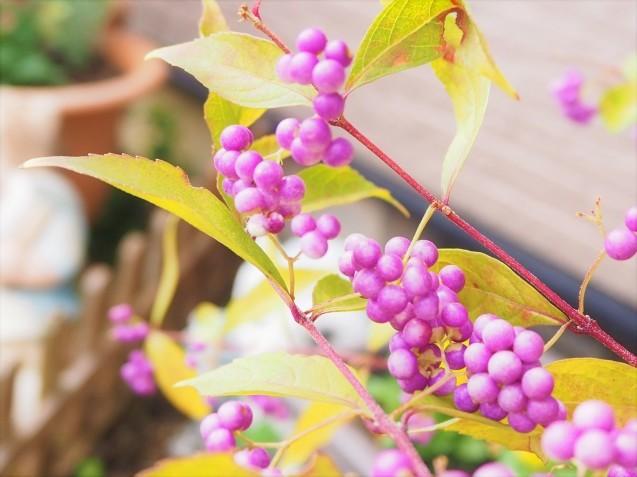 お花の植え替え~♪_a0037322_13264760.jpg
