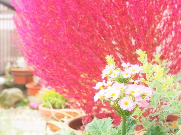 お花の植え替え~♪_a0037322_13271544.jpg