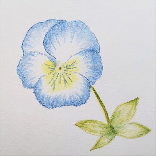 お花の植え替え~♪_a0037322_13331747.jpg