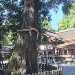 奈良でさまざまな御神木と出会う。_b0025850_17433559.jpg