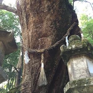 奈良でさまざまな御神木と出会う。_b0025850_17584738.jpg