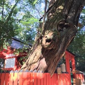 奈良でさまざまな御神木と出会う。_b0025850_18003184.jpg