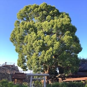 奈良でさまざまな御神木と出会う。_b0025850_18040258.jpg