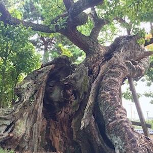 奈良でさまざまな御神木と出会う。_b0025850_18053303.jpg