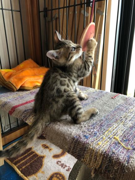 ネコ・天ちゃん、2ヶ月歳になる_d0339676_17440342.jpg