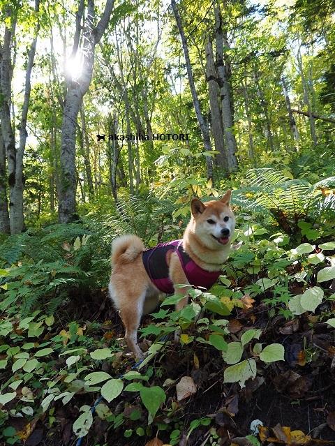 富里森林公園 2020.10_f0150377_15440222.jpg