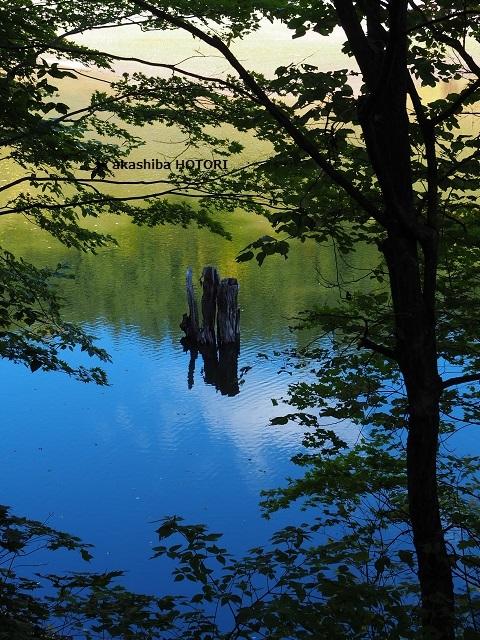 富里森林公園 2020.10_f0150377_15443497.jpg