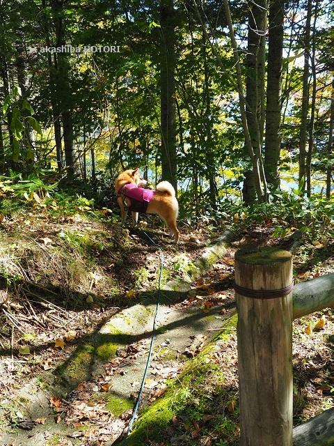 富里森林公園 2020.10_f0150377_15444512.jpg