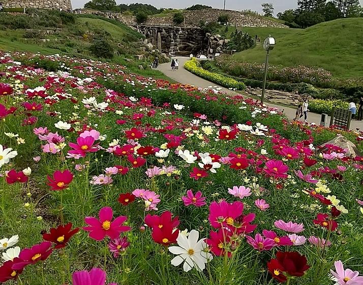 まんのう公園で秋を満喫_d0043390_21412321.jpg