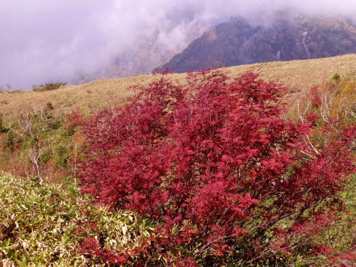 立山徘徊 紅葉を見る3・美松坂~弥陀ヶ原_f0374895_23105337.jpg