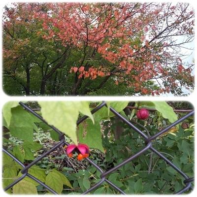 街は秋色に_b0198109_22384535.jpg