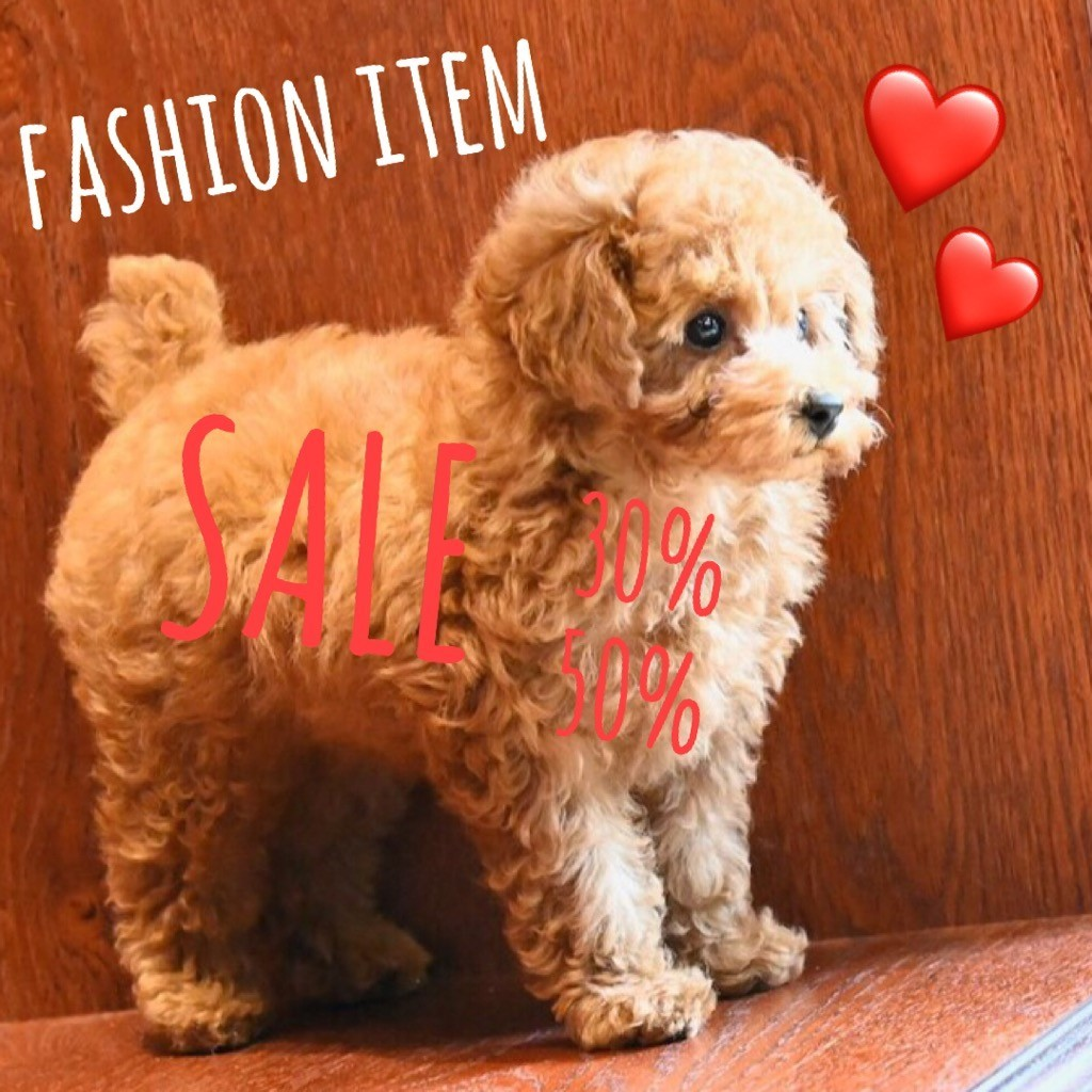 ☆ SALE ・ Fashion Item ☆_d0060413_15145599.jpg
