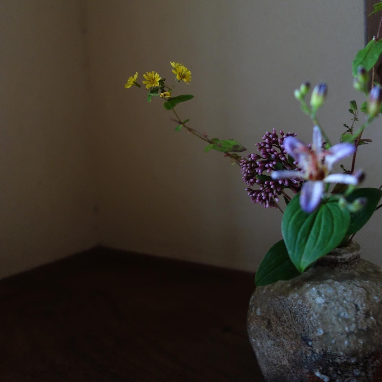 秋草の楽しい季節_a0197730_11340153.jpeg