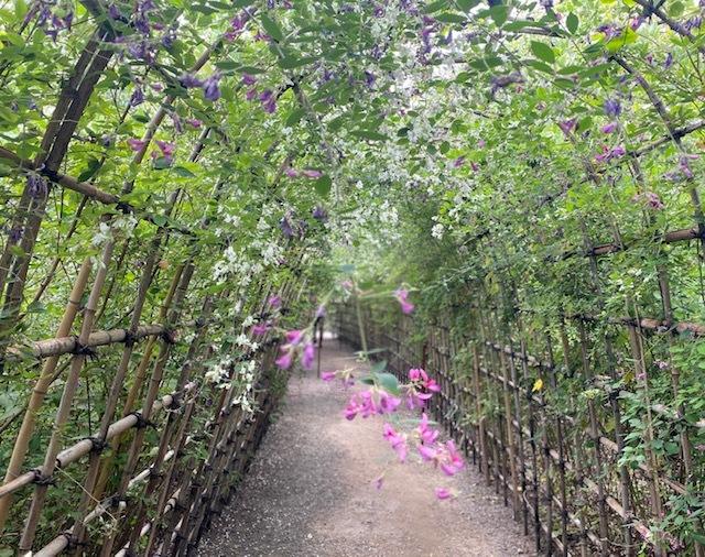 autumn  萩のトンネルに癒されて♪_a0165160_18340884.jpg