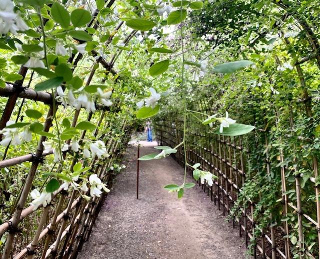 autumn  萩のトンネルに癒されて♪_a0165160_18384804.jpg