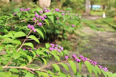 弘前城植物園を秋さんぽ_2020.10.07_d0131668_12034552.jpg