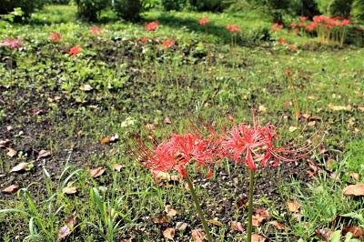 弘前城植物園を秋さんぽ_2020.10.07_d0131668_12034605.jpg