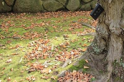 弘前城植物園を秋さんぽ_2020.10.07_d0131668_12034643.jpg
