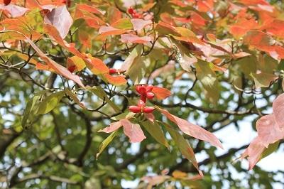 弘前城植物園を秋さんぽ_2020.10.07_d0131668_12034725.jpg