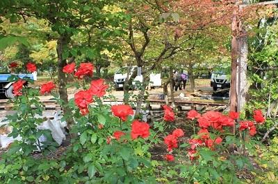 弘前城植物園を秋さんぽ_2020.10.07_d0131668_12034780.jpg