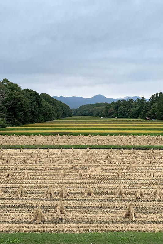 エコーラインで小淵沢へ 2020年10月3日_d0123571_17493914.jpg