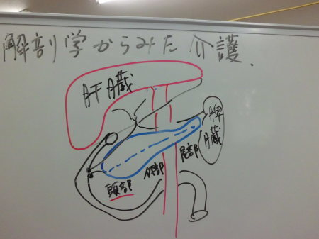 解剖学からみた介護②_e0096277_15502953.jpg