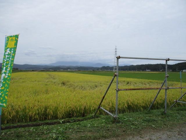 稲刈りについて(緑ヶ丘小・北郷小)_d0247484_14302520.jpg