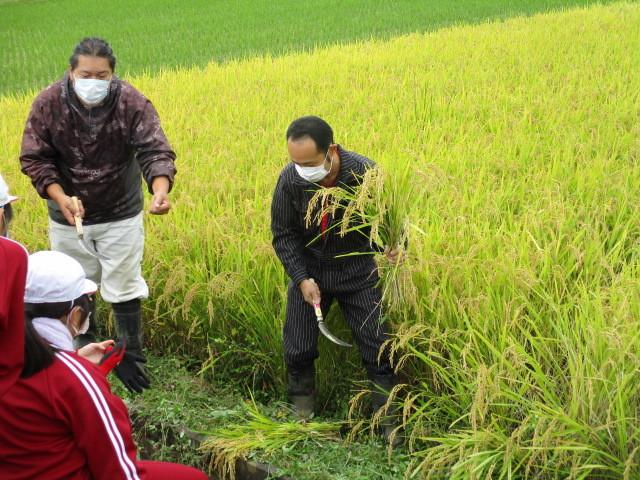 稲刈りについて(緑ヶ丘小・北郷小)_d0247484_14324480.jpg