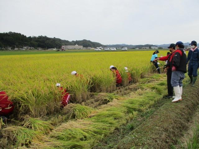 稲刈りについて(緑ヶ丘小・北郷小)_d0247484_14332963.jpg