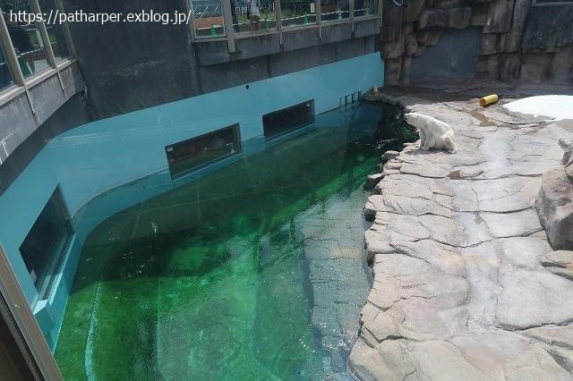 2020年9月 王子動物園2 その5 みゆきさんのオヤツタイム_a0052986_07384237.jpg