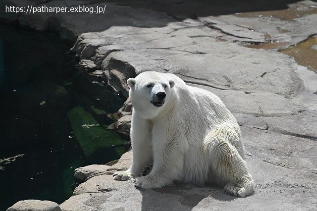 2020年9月 王子動物園2 その5 みゆきさんのオヤツタイム_a0052986_07421567.jpg