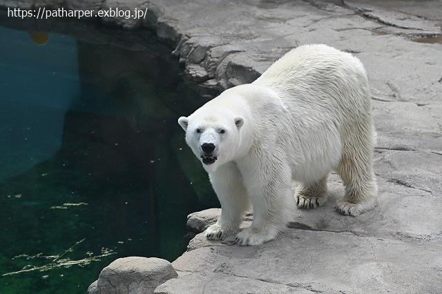 2020年9月 王子動物園2 その5 みゆきさんのオヤツタイム_a0052986_07421797.jpg