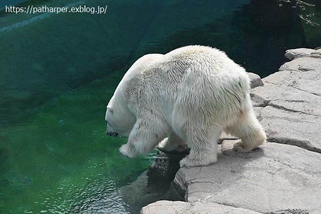 2020年9月 王子動物園2 その5 みゆきさんのオヤツタイム_a0052986_07441893.jpg