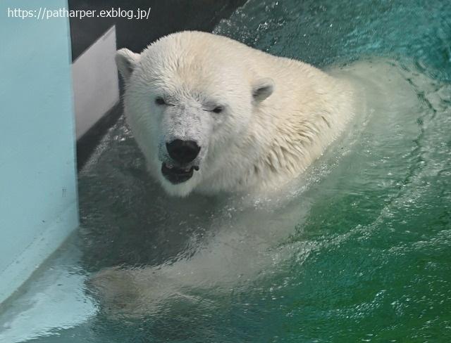 2020年9月 王子動物園2 その5 みゆきさんのオヤツタイム_a0052986_07453865.jpg