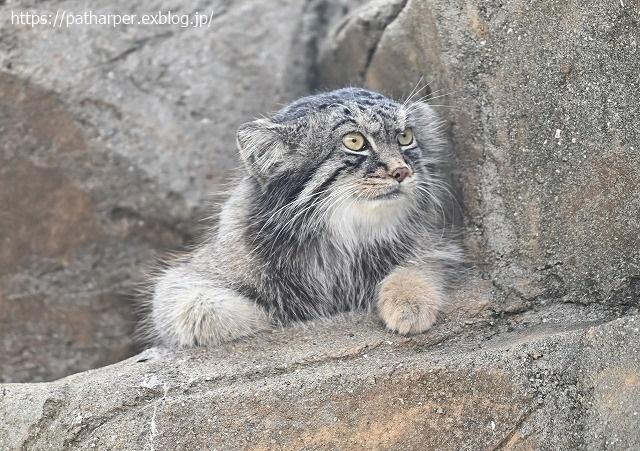 2020年9月 王子動物園2 その5 みゆきさんのオヤツタイム_a0052986_07495752.jpg