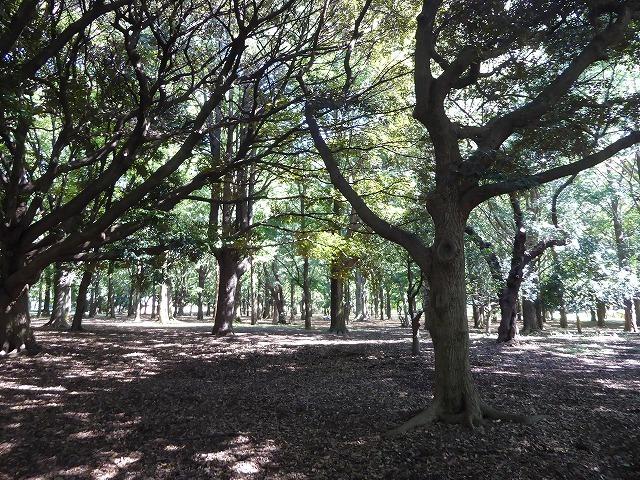 シースルーのトイレに入ってみた♪ 代々木公園ぼっち散歩&ぼっち飯♪_b0287088_17490000.jpg
