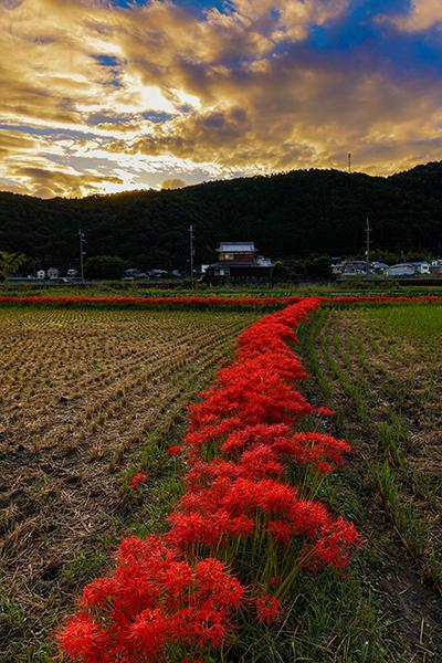 亀岡 曽我部町_e0051888_05365135.jpg