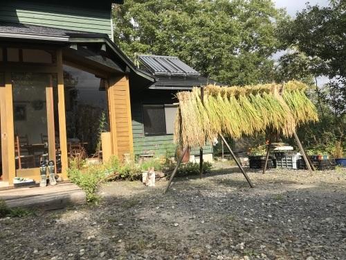 稲刈り    9月5日より始めました_a0189296_07022292.jpeg