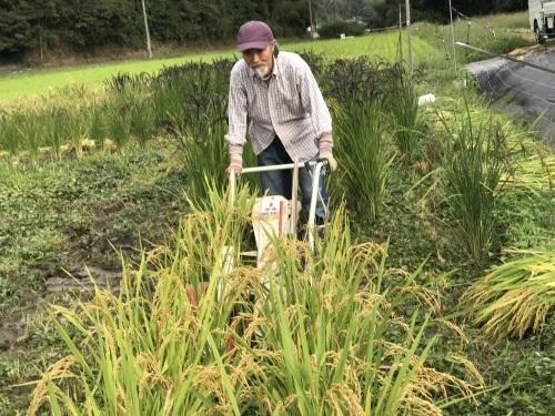 稲刈り    9月5日より始めました_a0189296_07024370.jpeg