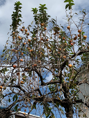 10月の庭 2020_f0239100_22503587.jpg