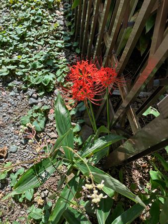 10月の庭 2020_f0239100_23074499.jpg