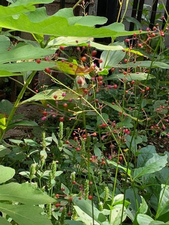 10月の庭 2020_f0239100_23132673.jpg