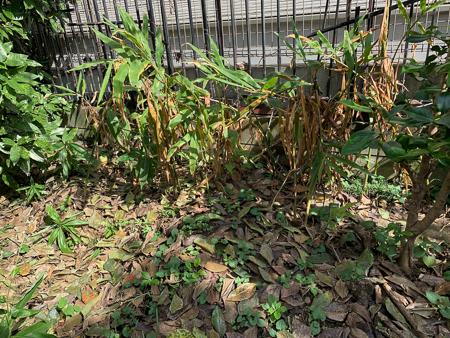 10月の庭 2020_f0239100_23303504.jpg