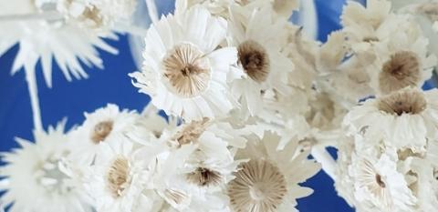 秋の母の日 花材その1_a0101801_08423951.jpg